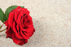 Fresh red rose lying on a stone Royalty Free Stock Photography