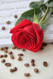 Fresh red rose. Stock Photo
