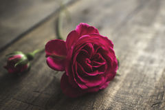 Fresh red rose on an old wooden board Stock Image