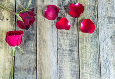 Fresh red rose on a wooden background. Royalty Free Stock Images