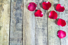 Fresh red rose on a wooden background. Royalty Free Stock Image