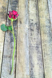 Fresh red rose on a wooden background. Stock Photo
