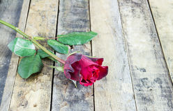 Fresh red rose on wooden background. Valentine's Day Stock Photo