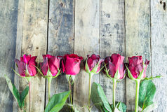 Fresh red rose on wooden background. Royalty Free Stock Photos