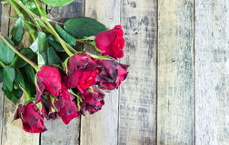 Fresh red rose on wooden background Stock Photography
