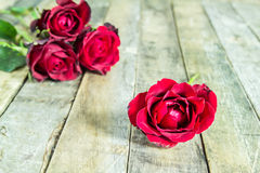 Fresh red rose on wooden background Royalty Free Stock Photography