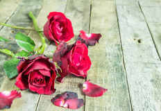 Fresh red rose on wooden background Royalty Free Stock Photo