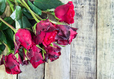 Fresh red rose on wooden background. Valentines Day Royalty Free Stock Photos