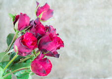 Fresh red rose on wooden background. Valentines Day Royalty Free Stock Photo