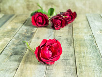 Fresh red rose on wooden background. Valentines Day Royalty Free Stock Image