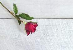Fresh red rose on a wooden background. Royalty Free Stock Photography