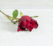Fresh red rose on a wooden background. Stock Photography