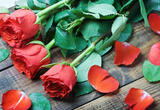 Fresh red roses Royalty Free Stock Images