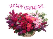 Fresh red roses in a basket on a white background. Happy Birthday. Bright pink festive fresh red roses in a basket on a white background. Happy Birthday Royalty Free Stock Photography