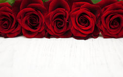 Fresh Red roses Stock Images