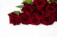 Fresh Red roses Stock Image