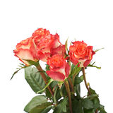 Fresh red roses over the white isolated background Stock Photography