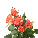 Fresh red roses over the white isolated background Stock Image