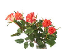 Fresh red roses over the white isolated background Royalty Free Stock Image
