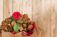 Fresh red roses The romantic vintage abstract on the wooden floo Royalty Free Stock Images