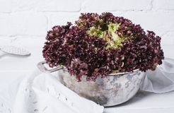 Fresh red salad lettuce leaves on a background of white brick wall top view close up horizontal stock photos