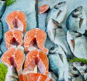 Fresh red salmon fish and dorado fish on ice. For sale in food market Stock Photos