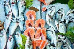 Fresh red salmon fish, dorado fish and other on ice. Fresh red salmon fish and dorado fish and other on ice for sale in food market Stock Photos