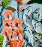 Fresh red salmon fish and dorado fish on ice, top view. Fresh red salmon fish and dorado fish on ice for sale in food market, top view Royalty Free Stock Images