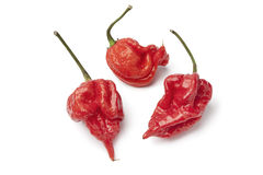 Fresh red scorpion chili peppers Royalty Free Stock Images