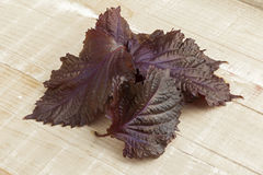 Fresh red shiso leaves Royalty Free Stock Photos