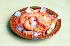 Fresh red shrimps Royalty Free Stock Photo
