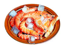 Fresh red shrimps with ice on the plate Stock Images