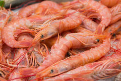 Fresh red shrimps on a market. Fresh shrimps   - South italian fish market Stock Photography