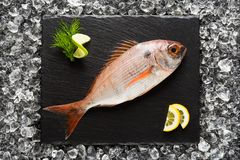 Fresh red snapper fish on a black stone plate Royalty Free Stock Image