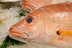 The fresh red snapper fish Royalty Free Stock Photos