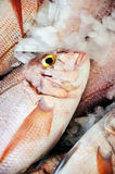 Fresh Red Snapper, market of Madeira Stock Photography
