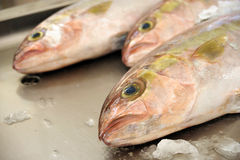 Fresh Red Snapper, market of Madeira Royalty Free Stock Photography