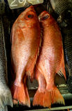 Fresh Red Snapper at the Market. Fresh Red Snapper for Sale at the Market Royalty Free Stock Images