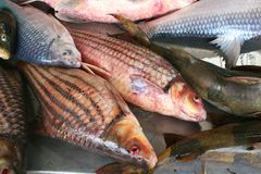 Luxury  fresh red snapper, Asian cuisine  Stock Photos
