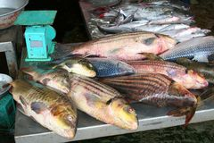 Fresh red snapper fish at the market, Asia Stock Photo