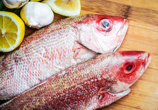 Fresh red snapper preparation with lemon and vegetables Stock Image