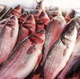 Fresh red snapper for sale in a fish market. Stock Photo