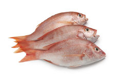 Fresh red snappers Royalty Free Stock Image