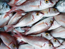 Fresh red snappers closeup Royalty Free Stock Images