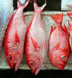 Fresh Red Snappers Stock Photos
