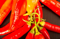 Fresh red spicy chilli aji chile Stock Photography