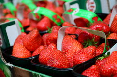 Fresh red strawberries arranged in baskets ready for sale at marketplace Royalty Free Stock Photos