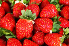Fresh red strawberries Royalty Free Stock Photo