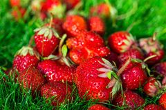 Fresh red strawberry closeup, background Royalty Free Stock Photography