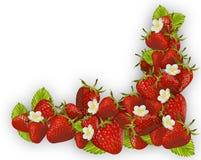 Fresh red strawberry frame Stock Image